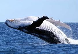 baleine-planete