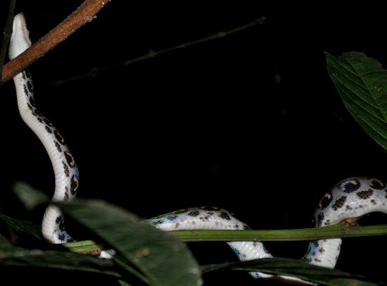 amazonie-randonnee-nuit