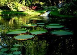 jardin rio janeiro bresil