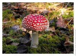 champignon plastique