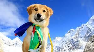chien everest