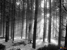 survie en forêt hiver