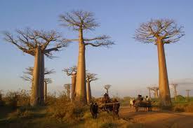 Madagascar randonnee