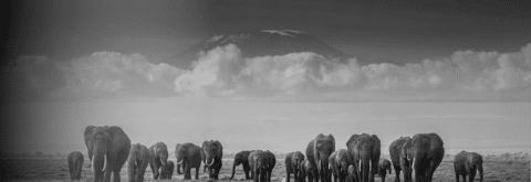 Mission Kilimandjaro !