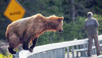 Comment survivre à des attaques d'animaux sauvages