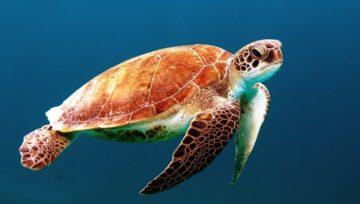 Océan Austral, 5ème océan sur Terre